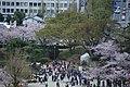 20160403 Himeji-Castle 3359 (26758497061).jpg