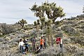 2017 Student Summit on Climate Change - Joshua tree Monitoring Project - Students measure the height of a Joshua tree (32650520504).jpg