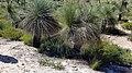 2018-01-31 151924 Nambung National Park, West Australia anagoria.jpg