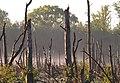 20210531 P5310095 0095 Abgestorbene Bäume im Moor.jpg