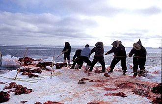 Hunting - Inuit walrus hunters, 1999