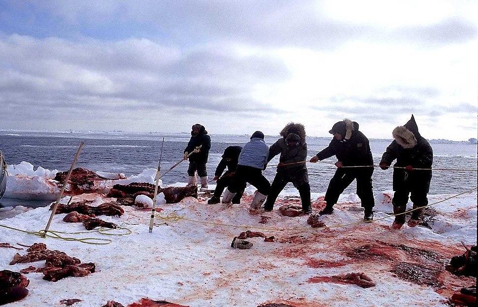 21 Walrus Hunt 1999