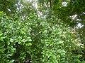 313Aven's Nature Farm 31.jpg