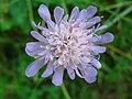 4451 - Bern - Flower.JPG