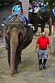 50 Jahre Knie's Kinderzoo - Elephas maximus 2012-10-03 15-38-26.JPG