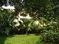 71Mehan Garden Ermita Manila Universidad de Manila 17.jpg