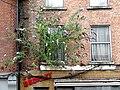 77 Queen Street Dublin 02.jpg