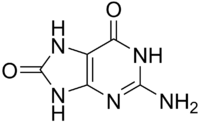 8-Oxoguanine.png