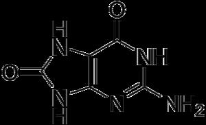 8-Oxoguanine - Image: 8 Oxoguanine