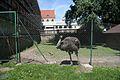 8278viki Zespół pocysterski w Henrykowie. Foto Barbara Maliszewska.jpg