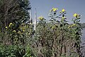 A4i017 9mp sunflowers, Gallagher Station (6371135577).jpg
