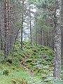 A Walk in the woods near Balleter - geograph.org.uk - 954036.jpg