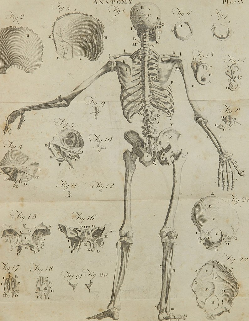 File:A compendious system of anatomy - in six parts - part I ...