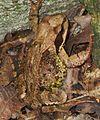 A frog near a stone1.jpg