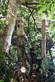 A laneside at the north of Nuthurst, West Sussex, England ~ posts and wire.JPG