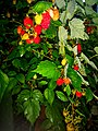 A lot of raspberries (50072746588).jpg