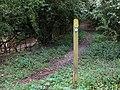 A shady bridleway (3) - geograph.org.uk - 1304992.jpg