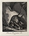 A tiger playing with its prey in a cave. Etching by J. E. Ri Wellcome V0021053EL.jpg