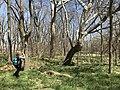 A woman takes a photo of a tree at Rock Creek Crossing in Council Grove, KS (16b3da18bb4249679840ab6063f75997).JPG