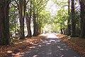 Access road toward Three Chimneys - geograph.org.uk - 1512591.jpg