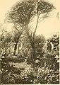 Acta Soc. pro Fauna et Flora Fennica (1912) (16152083763).jpg