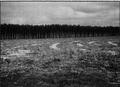 Afforestation Uruguay.png