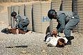 Afghan National Police Demonstrate their Capabilities MOD 45152097.jpg