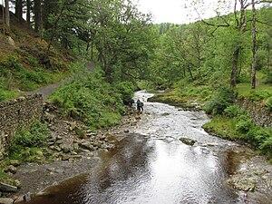 Afon Mawddach - Afon Mawddach in Coed-y-Brenin
