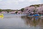 Akashi park spring.JPG