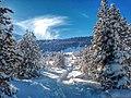 Alp Buffalora - panoramio.jpg