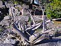 Alpine Garden (Montreal Botanical Garden) 08.jpg