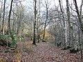 Alum Scar wood - panoramio (4).jpg