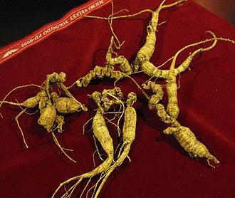 Ginseng - Image: American Ginseng 3