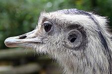 Vogel Ohren