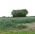 An overgrown drinking pond - geograph.org.uk - 1348976.jpg
