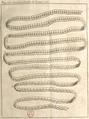 Andry - De la génération des vers (1741), planche p. 200-2.png