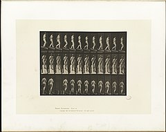 Animal locomotion. Plate 119 (Boston Public Library).jpg