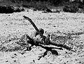 Animali marini pietrificati a Torre Guaceto.JPG