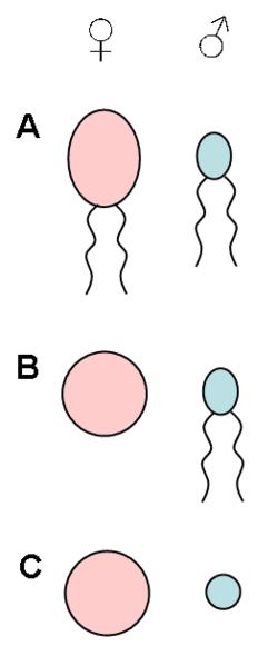 sædceller og ægceller