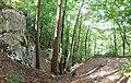 Annecy - forest 4.jpg