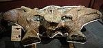 Apatosaurus sacrum BYU.jpg