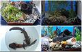 Aquarium for axolotls.jpg