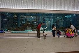 Aquarium in a mall in Okinawa 2015.jpg