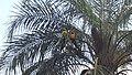 Araras da Morena.jpg