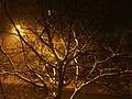 Arbre de nuit sous la neige.jpg