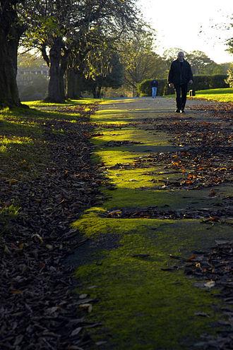 Armley Park - Armley park in autumn