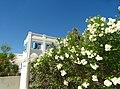 Armona Island (Portugal) (48777418407).jpg