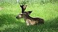 Assiniboine Park Zoo, Winnipeg (480479) (9445009193).jpg