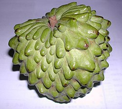 Atemola (cross of Annona cherimola and Annona squamosa).jpg