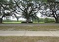 Audubon Park New Orleans 7 April 2020 - 05.jpg